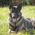 Собака помогла вернуть украденные вещи
