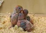 Чистка домика волнистых попугаев