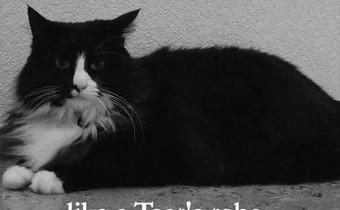 В США прошел кошачий видеофестиваль