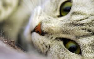 Как приучить кошку пользоваться унитазом