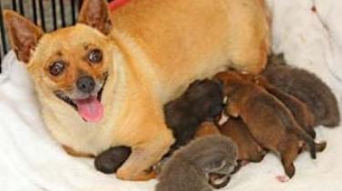 Собаки усыновляют котят