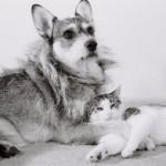 Джинни – собака, которая спасала кошек