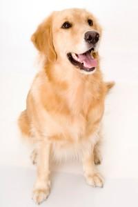 Собаки выявляют рак на ранних стадиях