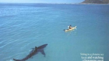 Акулы тоже способны любить