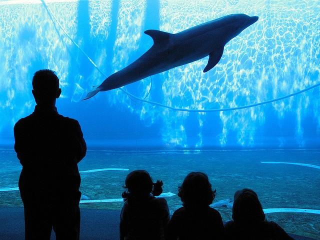 Самые большие аквариумы мира