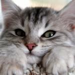 Как узнать, что у кота глисты