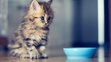 Кормление кошек. Составляем правильный рацион