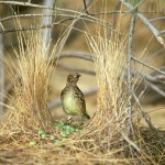 Необычные гнезда птиц