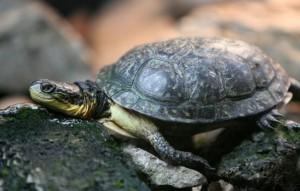 Выбор и покупка черепахи
