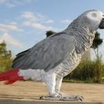 Попугаи жако не только могут работать в команде, но и выбирают коллег