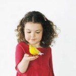 Приручение и дрессировка волнистых попугаев