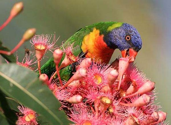 Дарвин - город пьяных попугаев