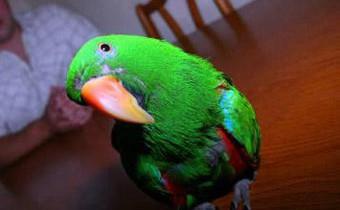 Попугай Кузя предотвратил ограбление дома в Лондоне
