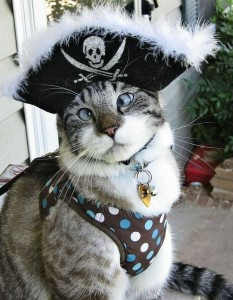 Косоглазый кот Спенгл (Spangle) стал звездой интернета