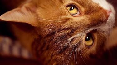 Бродячие кошки спасли ребенка от смерти