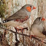 Ученые доказали способность птиц учиться пению во сне