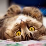 Cоотношение возраста кошки и человека