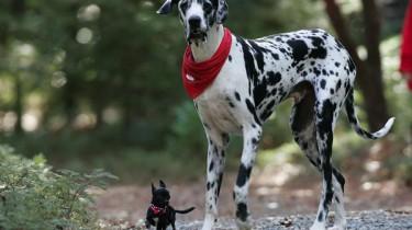 Собаки в книге рекордов Гиннеса