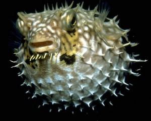 15 интересных фактов о рыбах