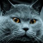 Как избавиться от меток кота
