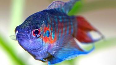 Как пахнет рыбий страх