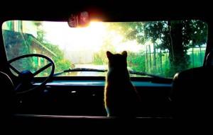 Как подготовить кота к поездке