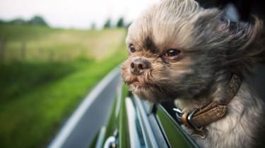 Как приучить собаку к поездкам на машине