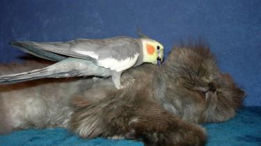 Корелла и другие животные в доме