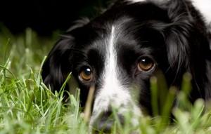 Кормление старой собаки