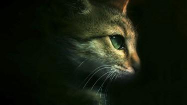 Кошки и мистика. Приметы о кошках