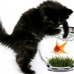 Популярные мифы о кошках