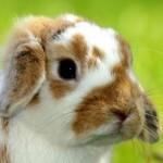 Декоративныe кролики. Первые дни дома