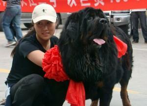 Самая дорогая собака в мире продана за $1,5 миллиона