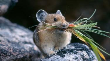 Осторожно! Ядовитые растения для декоративных мышей!
