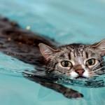 Плавать, чтобы ходить!