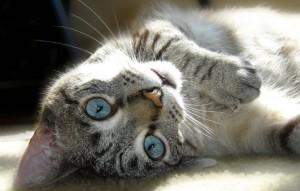Почему кошки любят тереться о людей?