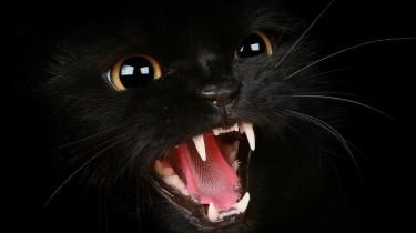 Поверья о черных кошках