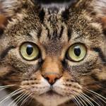 Рекорды и достижения кошек