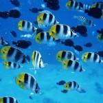 Рыбы чувствуют приближение землетрясения