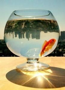 Рыбы предсказывают погоду