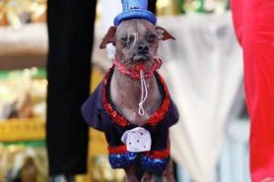 Названа самая уродливая собака 2012