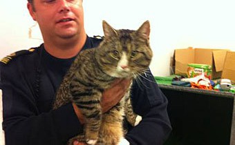 Шведская полиция задержала кота