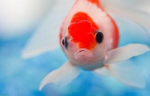 Словарь терминов аквариумиста
