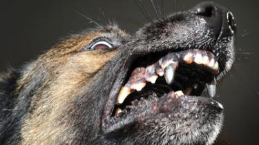 Собаки с железными зубами