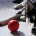 Стимулирование собаки вознаграждением