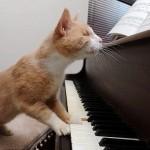 Стиви Уандер — слепой кот музыкант