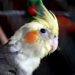 Транспортировка попугаев. Клетка для перевозки птиц